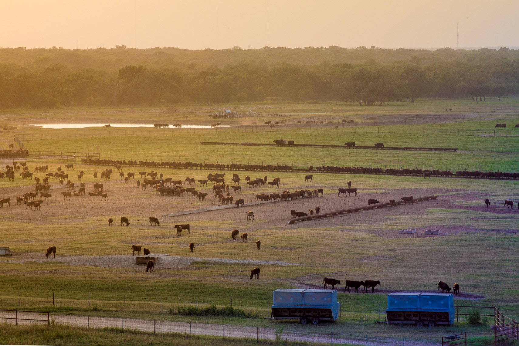 peeler-ranch-cattle-texas-jason-risner-photography-2953