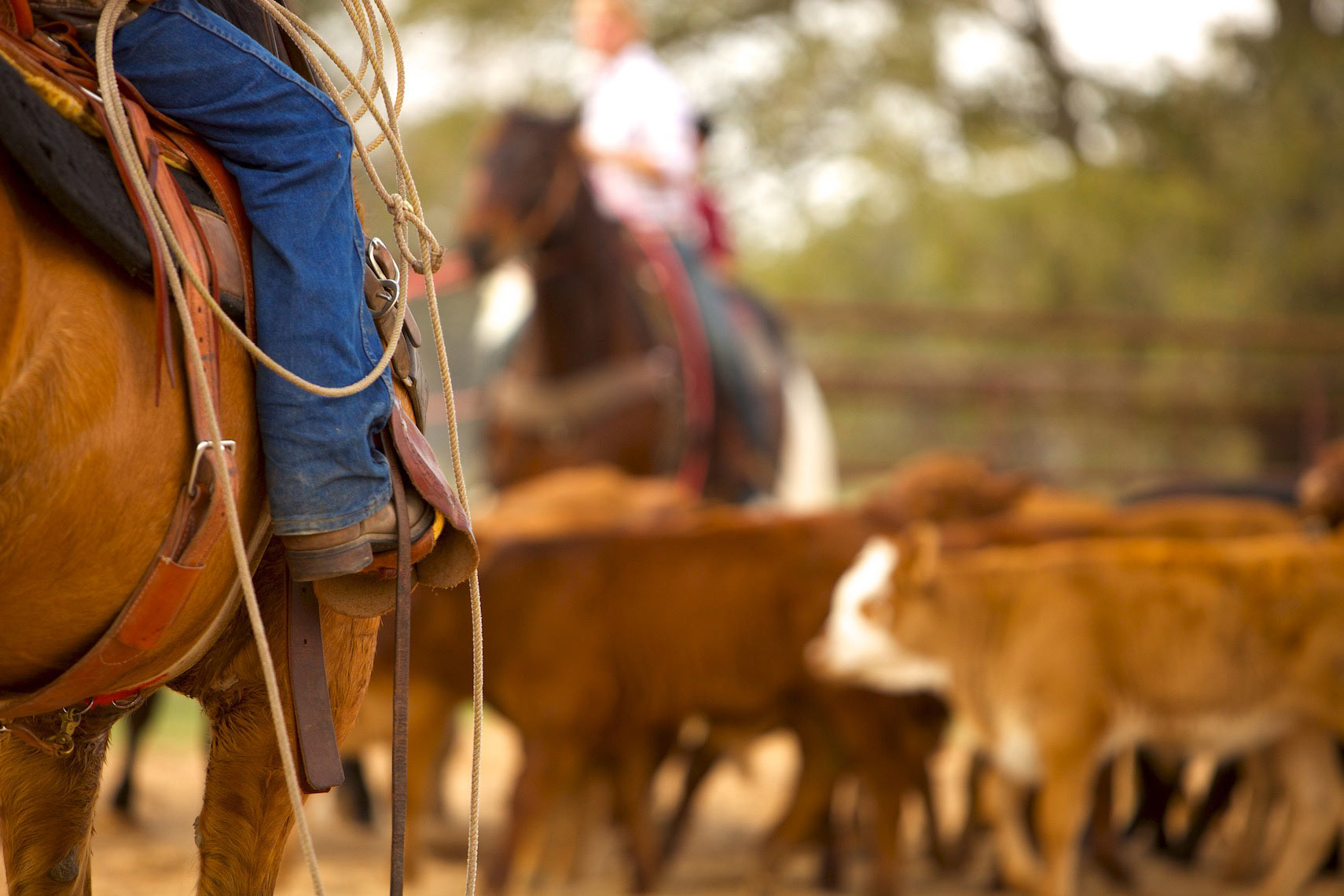 peeler-ranch-cattle-texas-jason-risner-photography-6462