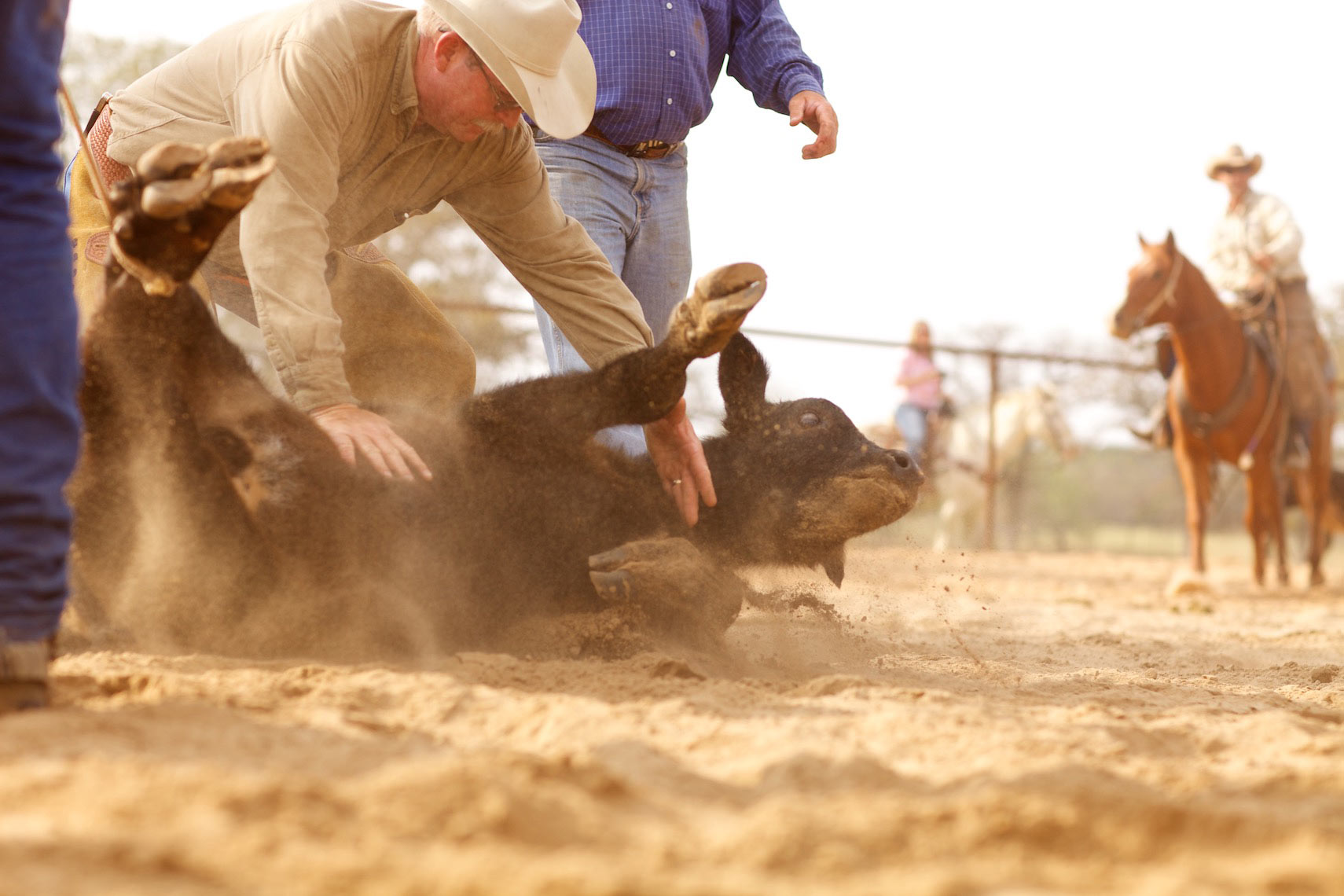 peeler-ranch-cattle-texas-jason-risner-photography-6495